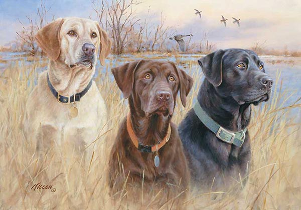 Hunting Labs Our Labs Are Hunting Dogs And